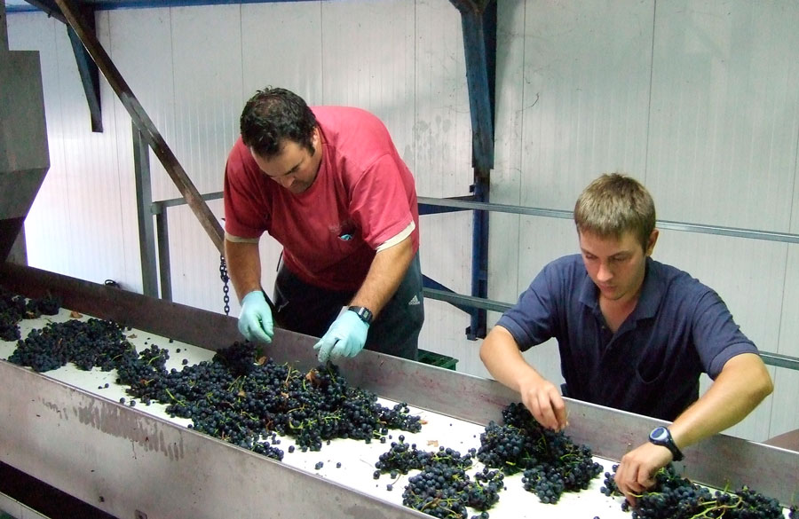 carbonic maceration wines